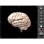 医療系アプリケーション-脳診断インターフェイス-